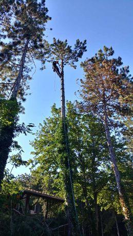 Рязане и подкастряне на стари и опасни дървета