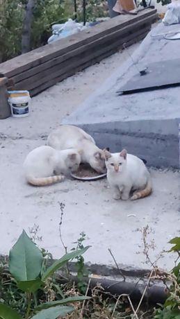 Срочно ищут дом котята