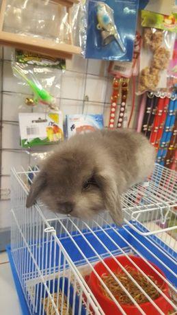 Продам вислоухого кролика юниор
