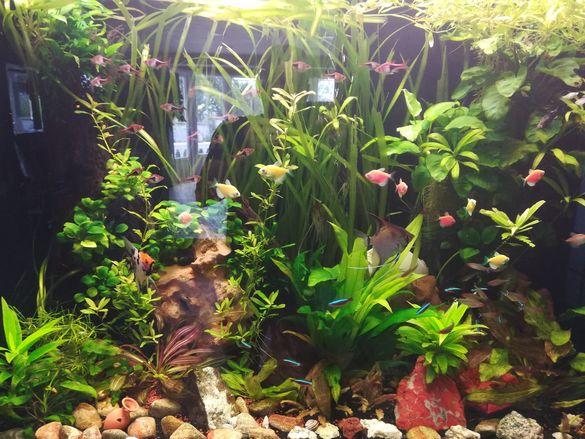 Поддръжка и изработка на аквариуми.