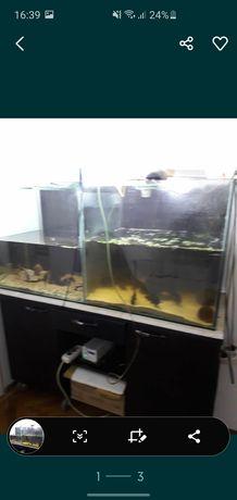 Acvariu pentru pesti mari