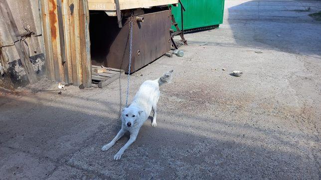 Потерялся пёс в районе Гавани
