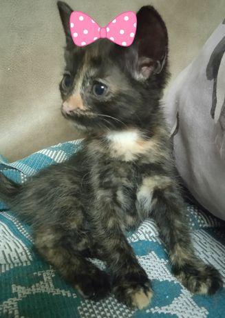 Котята-девочки,здоровы,стерелизация бесплатно в добрые руки