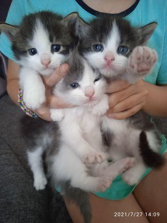 Отдадим котят в хорошие руки!!!