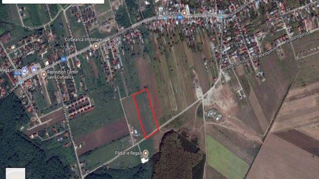 Schimp Teren 5000 mp Corbenca cu teren sau Casa in Otopeni
