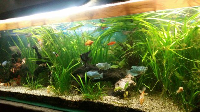 Vând acvariu cu filtru extern și cu suport.