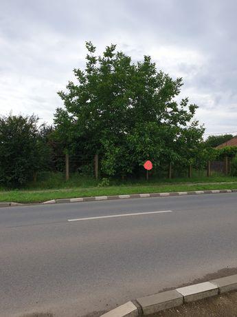 Ghermănești Snagov intravilan cu deschidere directă la Șosea
