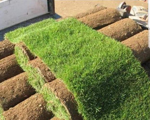 Amenajari spatii verzi si plante