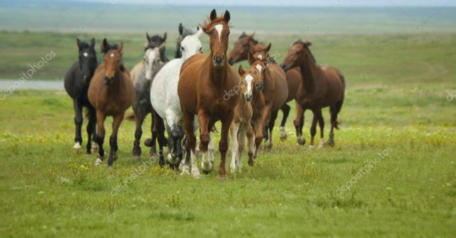 Продам оптом лошадей
