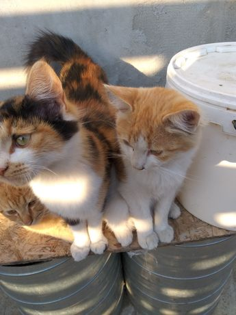 Doneze pui pisica 6 luni fetita
