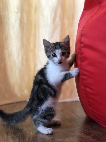 Отдается котенок, мальчик, в добрые руки