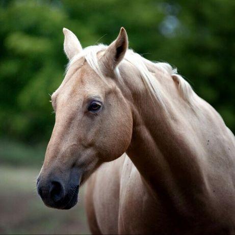 Лошадь на продажу
