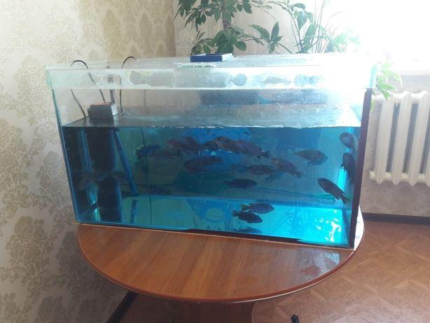 Продаю аквариум+20-25рыбы(цихлиды), фильтр, камни разноцветные,