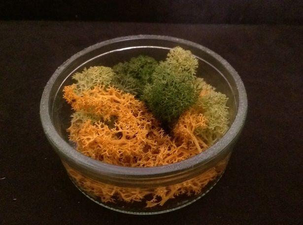 Decoratiuni cu licheni