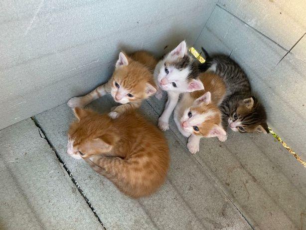 Кошки,без породы