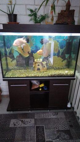 Продам аквариум на 260 литров.