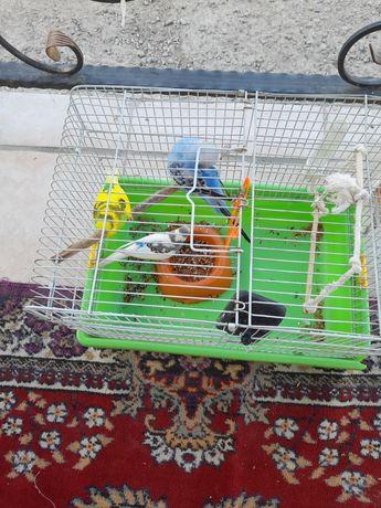 Продам попугай красивые