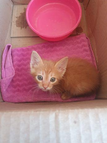 Котенок 2-3х месячный, нашли на улице, отдам в добрые руки