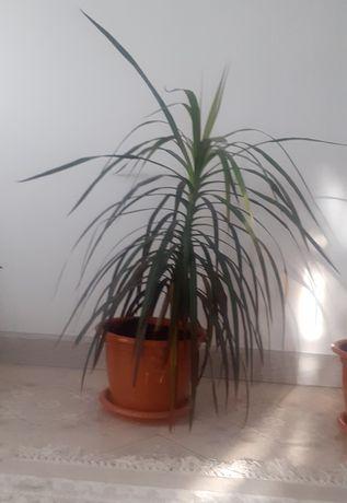 Домашние цветы,домашний растения