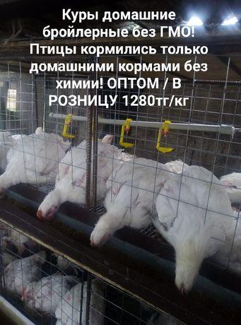 Куры домашние бройлерные Алматы 1280/кг
