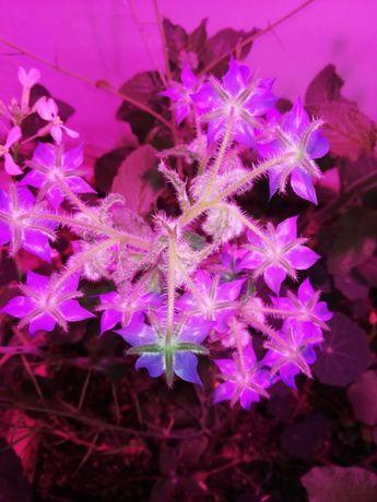 Продам фитолампы ( full spectum 50ват)! Для всех видов растений!!