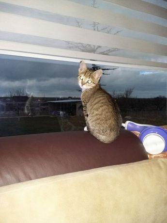 Pensiune (cazare,foster)pisicute,pasarele, rozatoare de companie