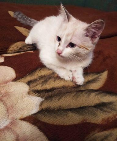 Котятки белые.в хорошие руки
