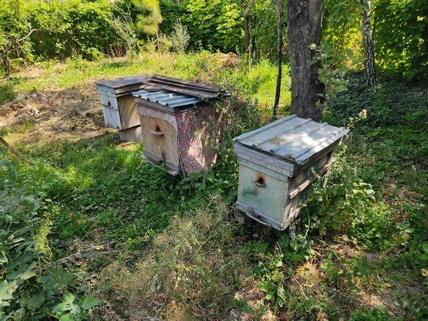 Улики с пчелами карпатка