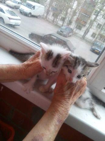 Отдам в хорошие руки 2-ух очаровательных котят!