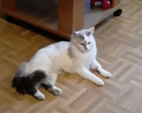Красвый котик 1,5 года