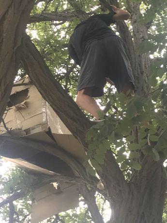 Сдается в аренду домик на дереве