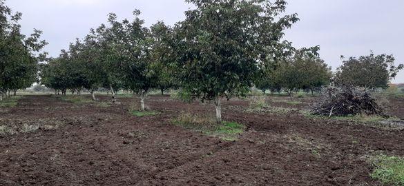 Овощни орехови градини ,два парцела съответно 13-15дка. Общо 28дка