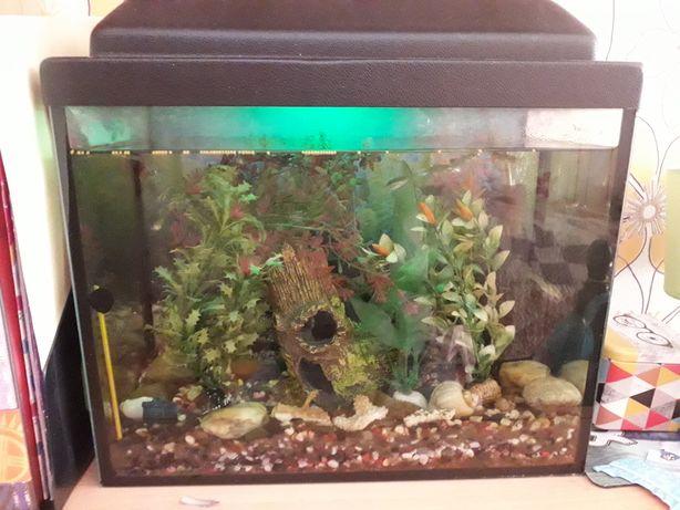 Продам аквариум всё в комплекте