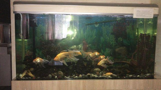 Продам аквариум на 300 литров с рыбами