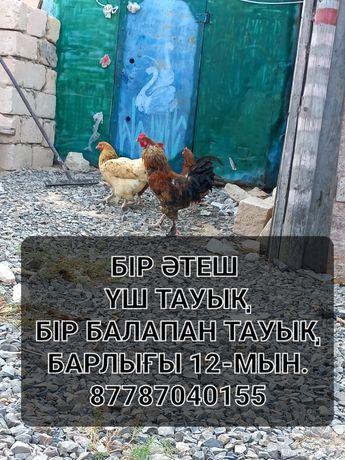 Продаётся курицы