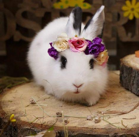 Продаётся кролик