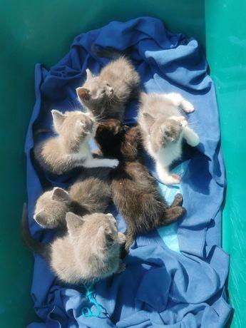 Ofer spre adopție pui de pisică