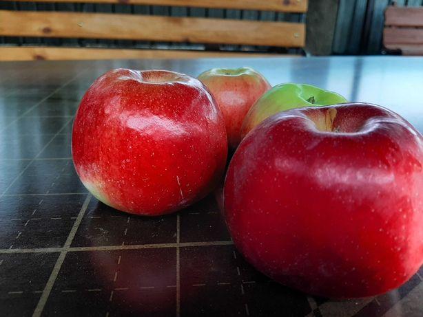 Продам яблоки оптом , свой сад
