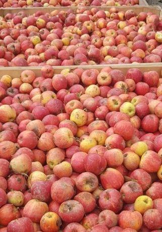 Vând mere pentru suc și țuică