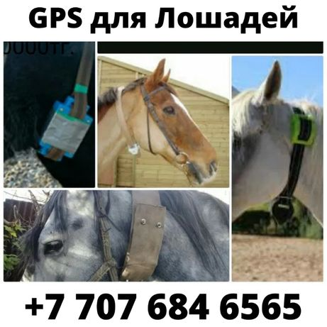 GPS для Лошадей/Жылкыга ЖПС заряд до 100дней/Доставка по КЗ