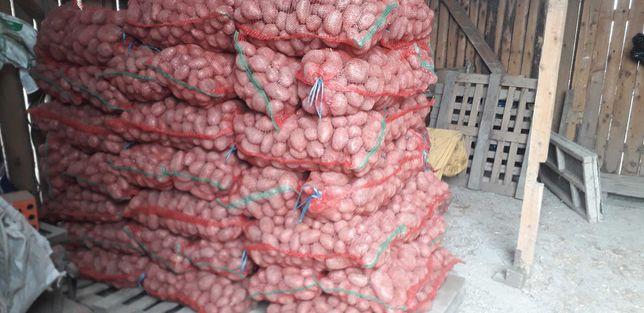 Cartofi consum red