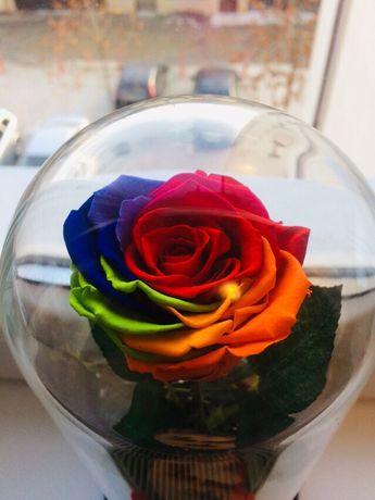 Trandafir criogenat multicolor rainbow