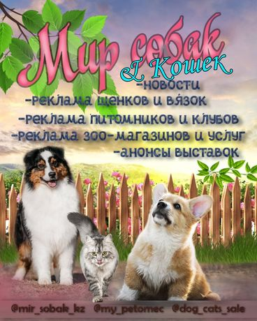 Щенки котята крупнейшая группа по казахстану