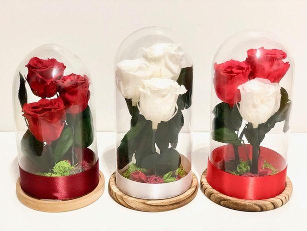 Livram azi Trandafiri naturali criogenati cupolă mare cu 3 trandafiri