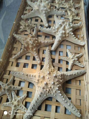 Продам морских звезд.За 11 звезд  10000.т.Рзмер от 30 см до 10 см
