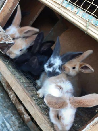 Клетки для кроликав кролики