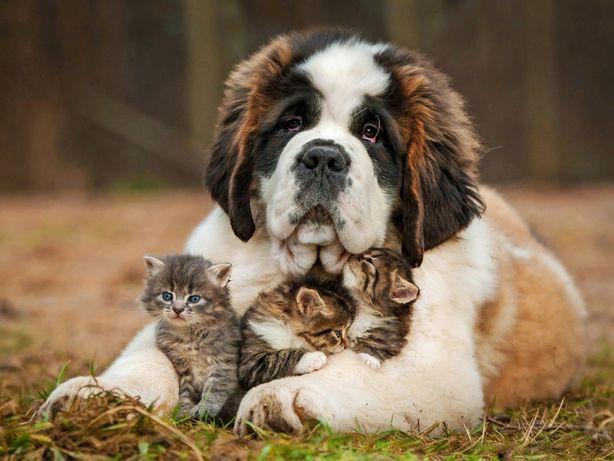 Приборы для лечения собак и кошек