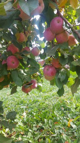 Vând mere din gospodăria proprie, diferite soiuri