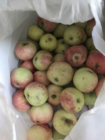 Яблоки Дачные