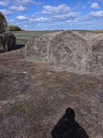 продам сено болотное